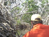 Approaching one of Costa Maya's tarpon lakes through the mangroves.