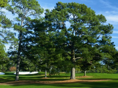 The Eisenhower Tree