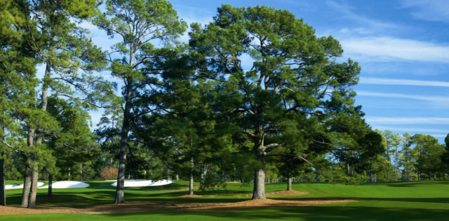The Eisenhower Tree