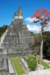 Tikal tempel and red tree