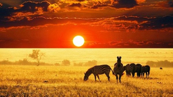 SOUTH AFRICA_wildlife sunset