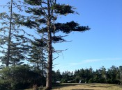 Bandon Dunes Shorty's