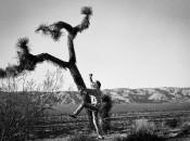 Zen Joshua Tree