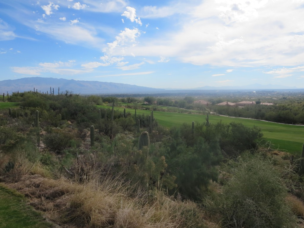 Arizona National fairways cut through Sonoran desert