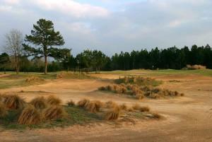 Pine Dunes NO. 11