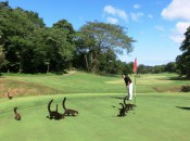 Getting close to nature on the No. 2 green