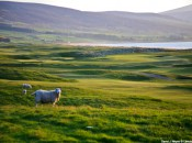 Brora Golf Club- 3rd - David J Whyte (C) Linksland.com