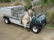 In Mississippi, even the dogs love golf. Tucker helps maintain the great conditions at the Preserve, one of the best courses on the Gulf Coast.