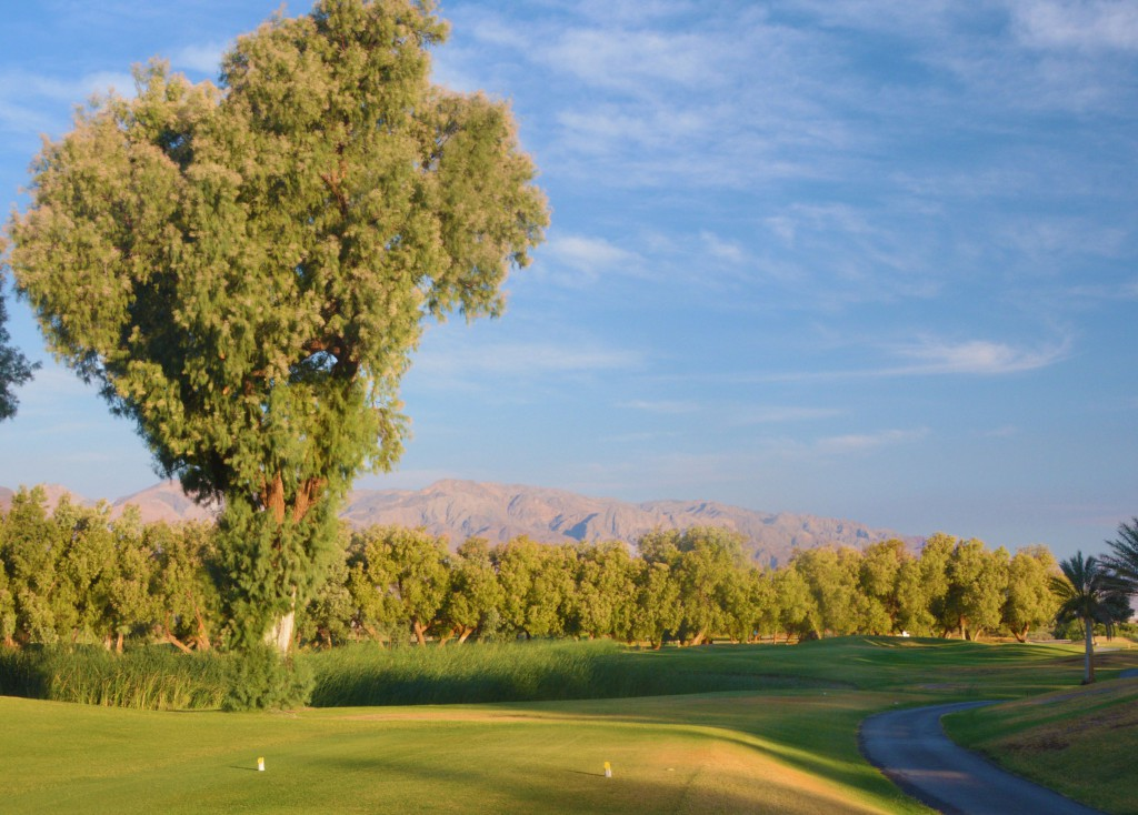 Desert oasis at Furnace Creek GC