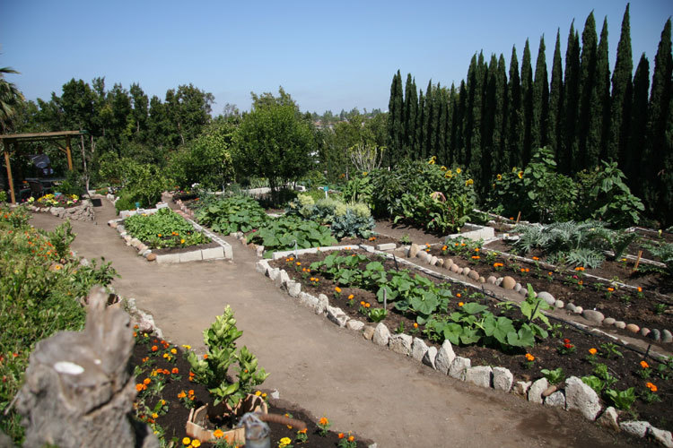 The organic food including a huge crop of wheatgrass is grown on the OHI San Diego Campus.