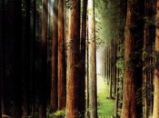 No_03_Redwood_Forest