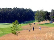 Muskegon CC's amber waves of fescue