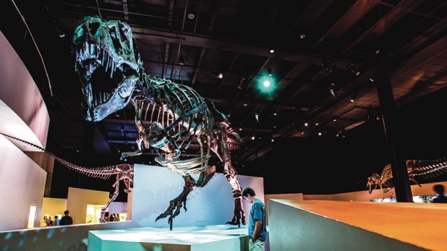 A T-Rex reigns at the Museum of Nat Science