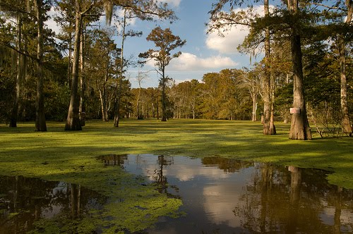 The Atchafalaya At Idlewild Into The Heart Of Darkness
