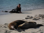 An Ecoventura Galapagos guest snorkels on shore next to sunbathing sea lions.