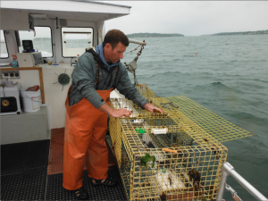 """Lucky Catch"" Captain Tom Martin checks a lobster trap in Casco Bay while leading tourists in search of the prized delicacy. (photo credit Harrison Shiels)"