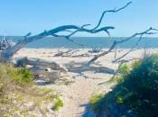 Boneyard Beach Jacksonville, Florida